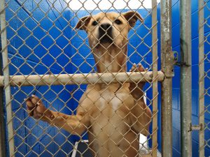Dog awaiting adoption