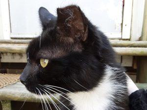 Cat awaiting adoption